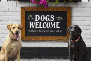 "Picture of two labrador retrievers, one yellow and one black, sitting near a white brick wall, with both dogs looking at the camera. Behind the dogs, hung on the wall, is a nicely framed sign reading ""DOGS WELCOME"" in large white, friendly text, with the notation below ""Water & Biscuits Available"" below in a smaller font."